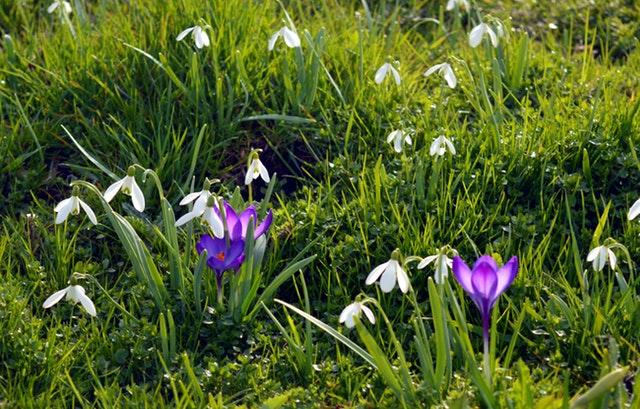 Byd foråret velkommen i din have