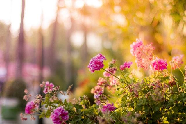 Skab en fantastisk have til sommeren med disse tips